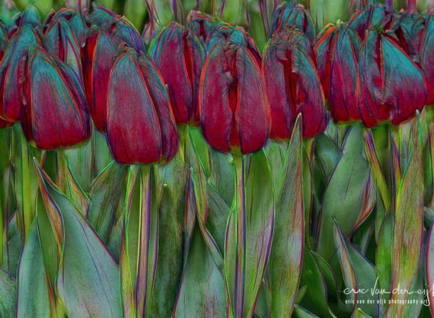 abstract kunst met rode tulpen